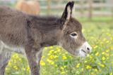 Donkey Baby 5 Days Old