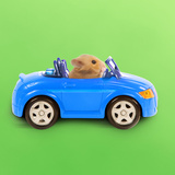 Hamster Driving Miniature Sports Convertible Car