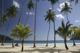 Palm Trees on Maracas Beach