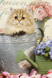 Persian Kitten in Flowerpot