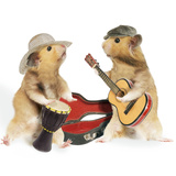 Hamsters Playing Musical Instruments
