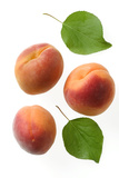 Apricot Fruit and Leaves
