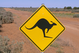 Australia Road Sign Warning of Kangaroos