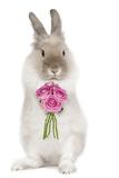 Dwarf Lion-Head Rabbit on Hind Legs Holding Flowers