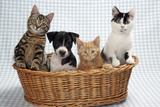 Dog and Cats Three Kittens and a Puppy Sitting in Basket
