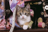 Kitten with Sewing Machine
