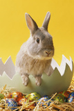 Rabbit in Egg Shell with Easter Eggs
