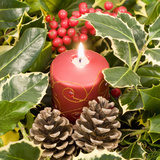 Christmas Candle and Holly Berries