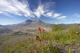 Mount St Helens Volcano with Flowers in Foreground