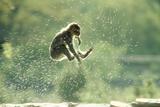 Rock Ape Leaping