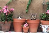 2 Kittens in Flowerpots