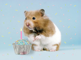 Hamster with Cake and Candle