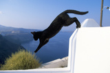 Cat- Black  Jumping Off Wall