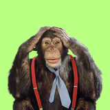 Chimpanzee Wearing Tie and Braces