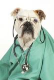Bullin Vets Scrubs Wearing Glasses and Stethoscope