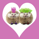 Punk Girl and Boy Hedgehog in Pink Heart Shaped Frame