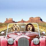 Golden Retrievers Driving Car Through Desert Scene