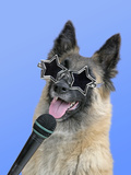 Tervuren with Microphone and Star Shaped Sunglasses