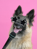 Tervuren  with Microphone and Glasses