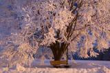Frosty Winter Scene  Snow-Covered Landscape