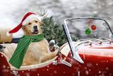 Golden Retriever Driving Car Collecting Christmas Tree Papier Photo