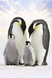 Emperor Penguin, Two Adults with Two Chicks Papier Photo