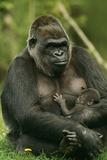Gorilla Cuddles Baby