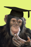Chimpanzee in Mortarboard