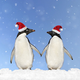 Adelie Penguin Holding Hands Wearing Christmas Hats