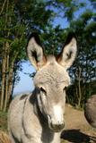 Donkey Close-Up of Face