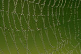 Cobweb with Droplets of Morning Dew