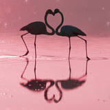 Greater Flamingo Pair Kissing