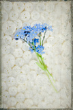 Forget Me Not Flower Still Life