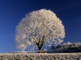Frosty Landscape  Frost Covered Tree and Bench