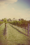 Vines in Summer
