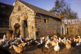 France Farmyard with Chickens