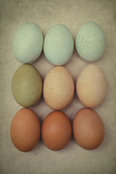 Blue and Brown Chicken Eggs