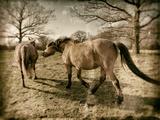 Suffolk Ponies