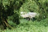The Mountain Gorilla Story Diane Fossey's House