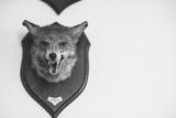 Stuffed Fox Head