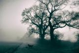 A Black Dog in a Field