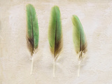 Green Feather Collection