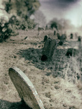 Old Gravestones in Overgrown Graveyard