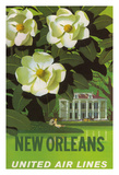 New Orleans  USA  Magnolia Blossoms  Louisiana State Flower  United Air Lines