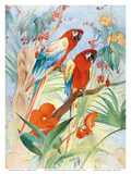 The Quaint Macaw  Red and Blue Macaws (Ara Macao)   From the Painting entitled Aristocrats