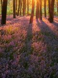 Bluebell Sunset II