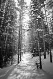 Snow Covered Pines Trees Papier Photo par Julie Rideout