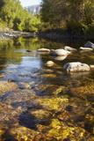 Usa  Colorado  Mountain Stream
