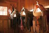 Usa  Colorado  Saddles in Barn