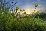 Rising Beyond the Buttercups